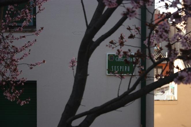Entre un árbol florido y un suspiro. Calle del suspiro. Huesca. LeleSorribas2013